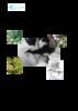 Memoire_Valerie_Huet-Administration_tisane_bébés_créoles.pdf - application/pdf